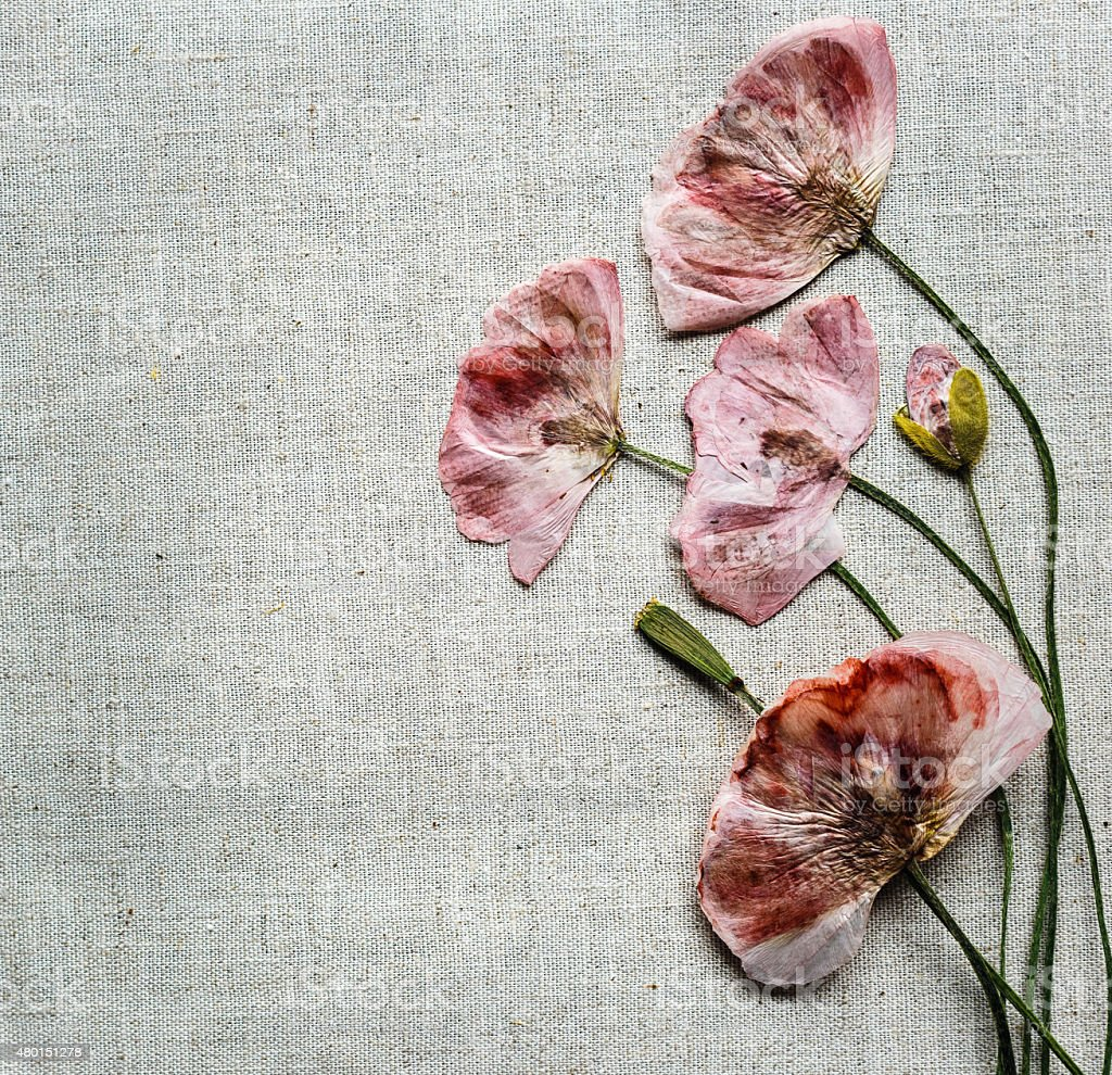 Dry Red Poppy Flowers Looks Like Embroidery On Linen Background