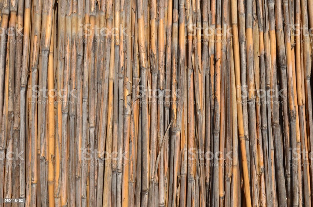 Dry reed stems backgroud stock photo