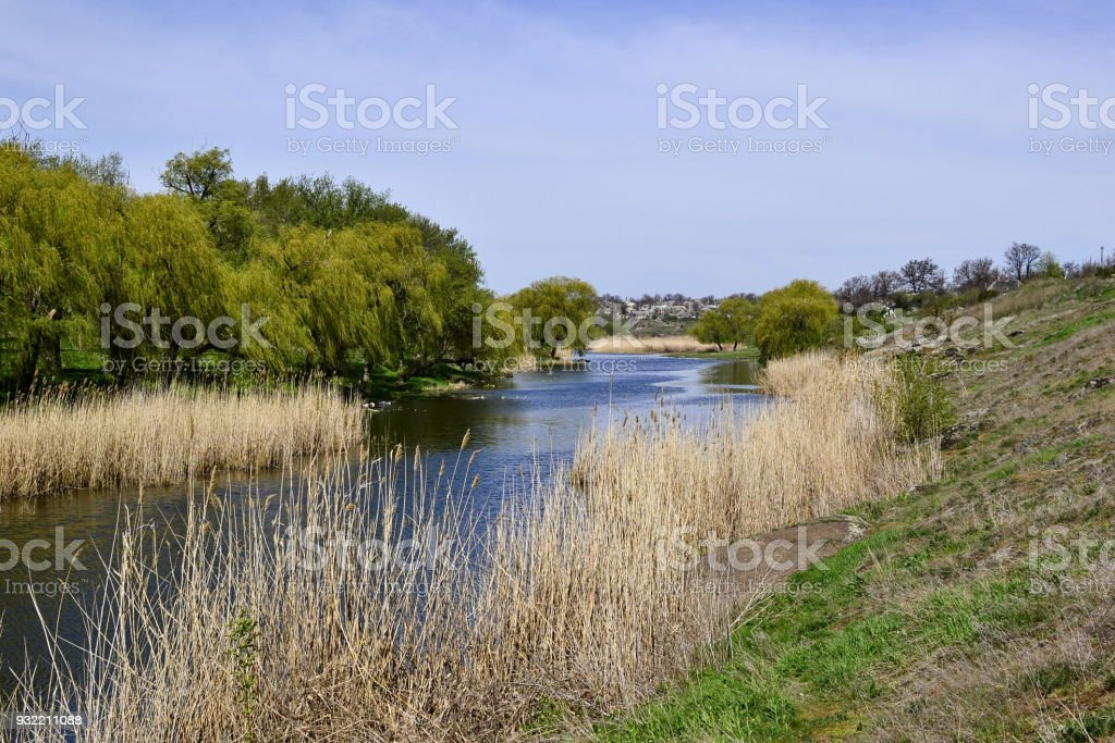 Dry reeds and green trees along river stock photo