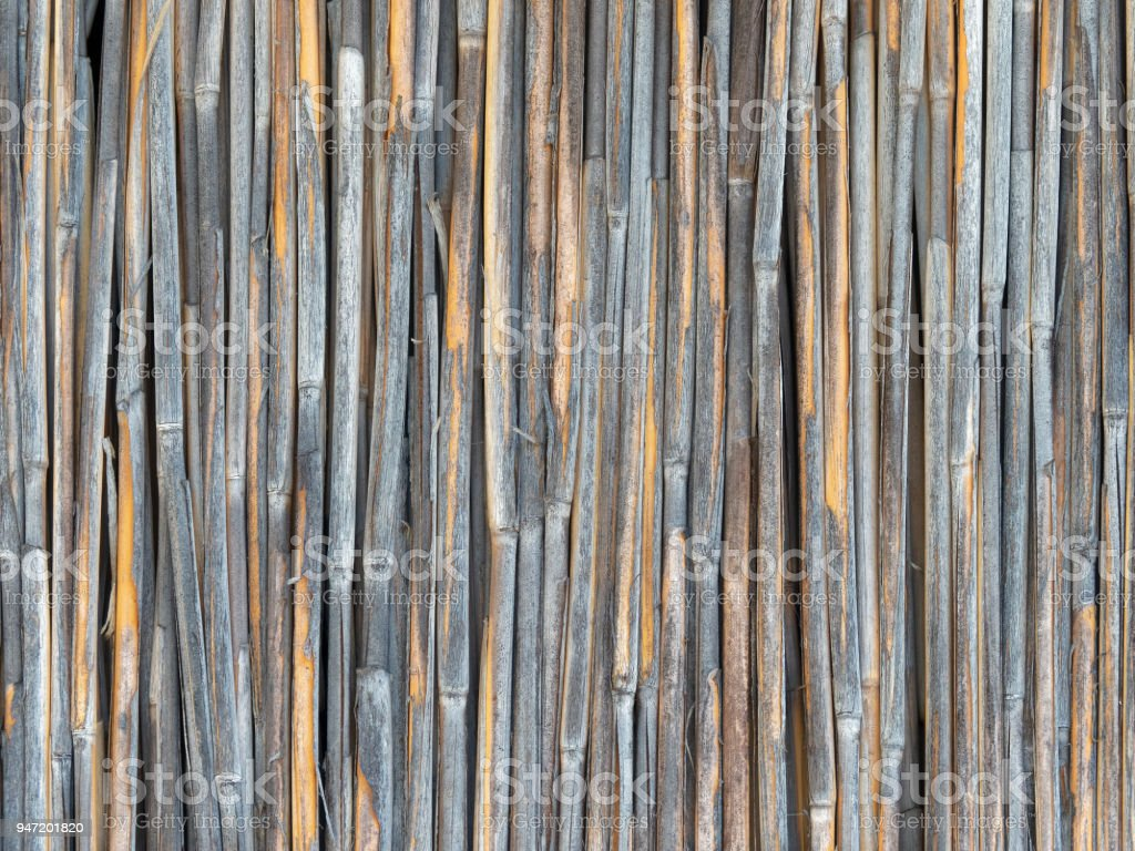 Dry Reeds Wall Texture stock photo