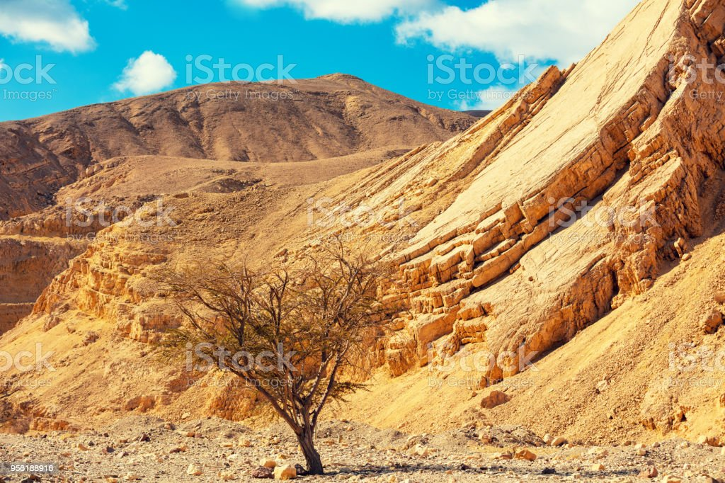 Dry river bed. Desert mountain landscape.