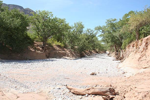 trockenes flussbett zwischen sesfontein und opuwo, namibia, südafrika - afrikanische steppe dürre stock-fotos und bilder
