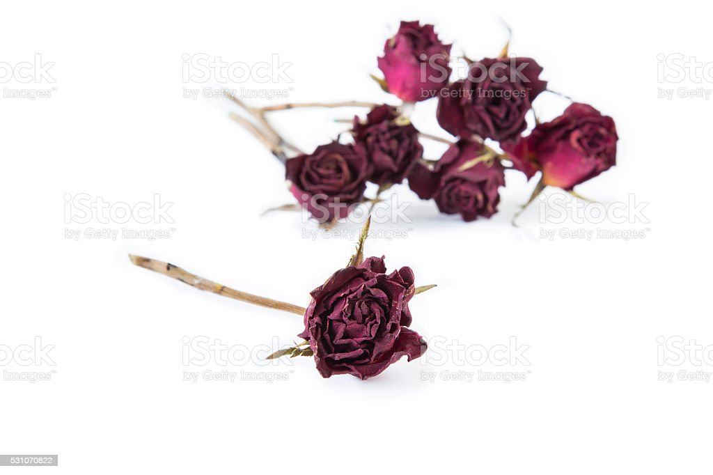 Asciutto E Rosa Rosa Sfondo Sfocato Solo Su Sfondo Bianco