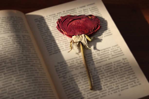 Dry rose book picture id627199600?b=1&k=6&m=627199600&s=612x612&w=0&h=24ph3lzqunth7 vnufu36x83vynztrz6kflljbcawse=