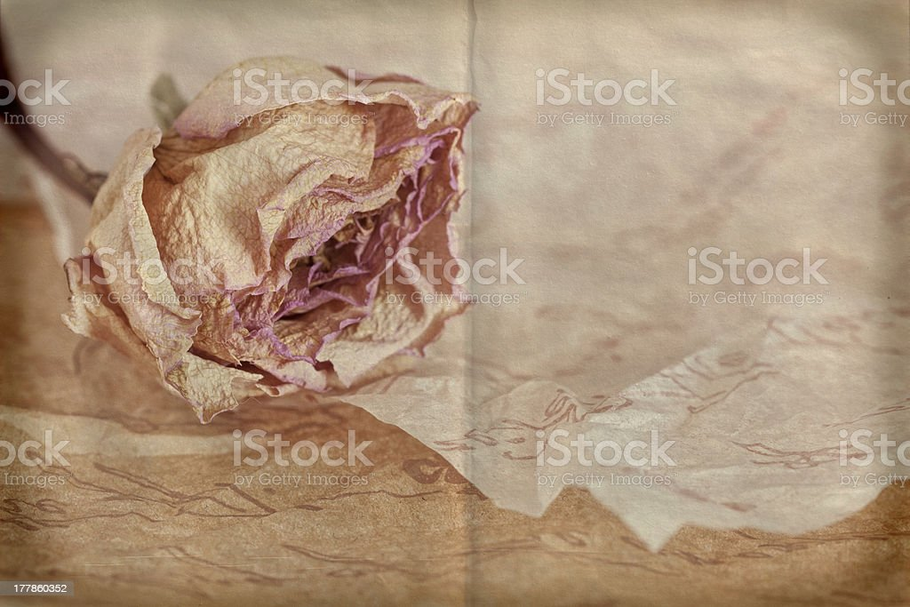 Dry rose on crumpled paper royalty-free stock photo