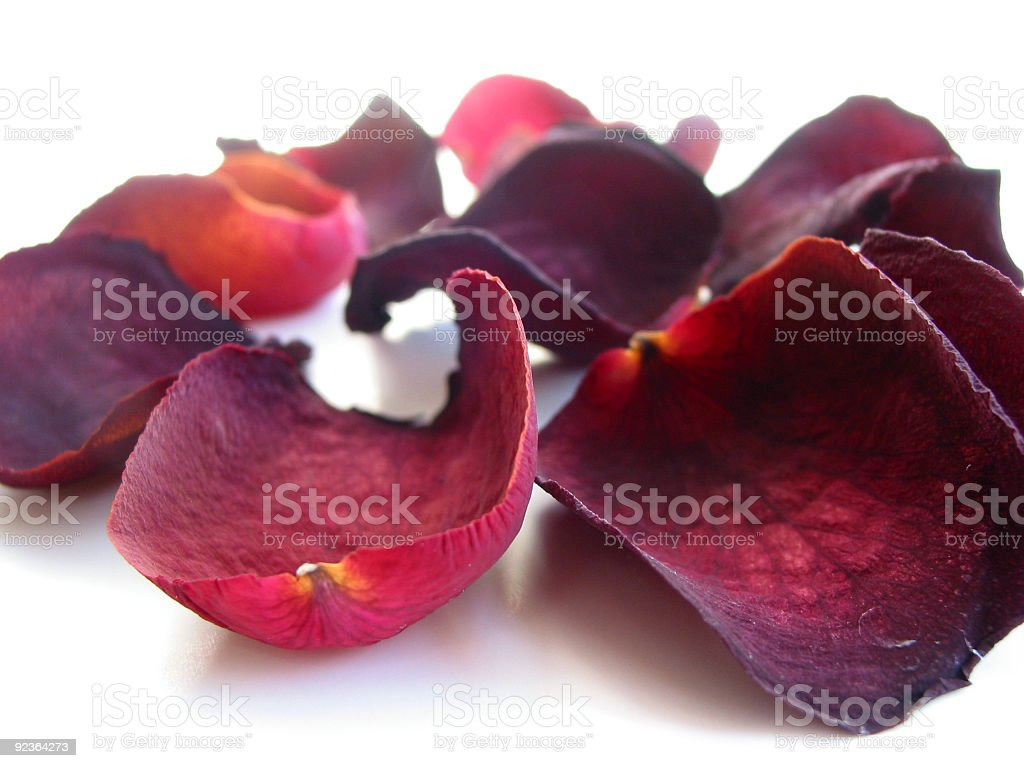 Dry rose petals royalty-free stock photo