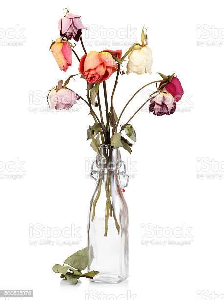 Dry roses in glass bottle picture id500535378?b=1&k=6&m=500535378&s=612x612&h=ckf0yvqdhny4qhbxnvmpzckdbv7qs6yta t6kew1xi0=