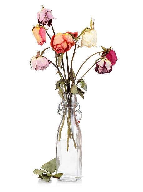 seco de rosas em frasco de vidro - planta morta imagens e fotografias de stock