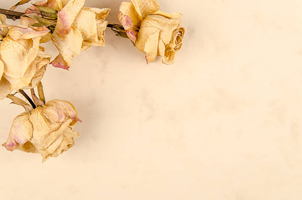 dry roses on vintage paper stock photo