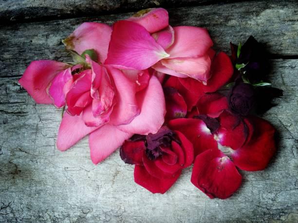 Trockenen Rosen Blütenblätter – Foto