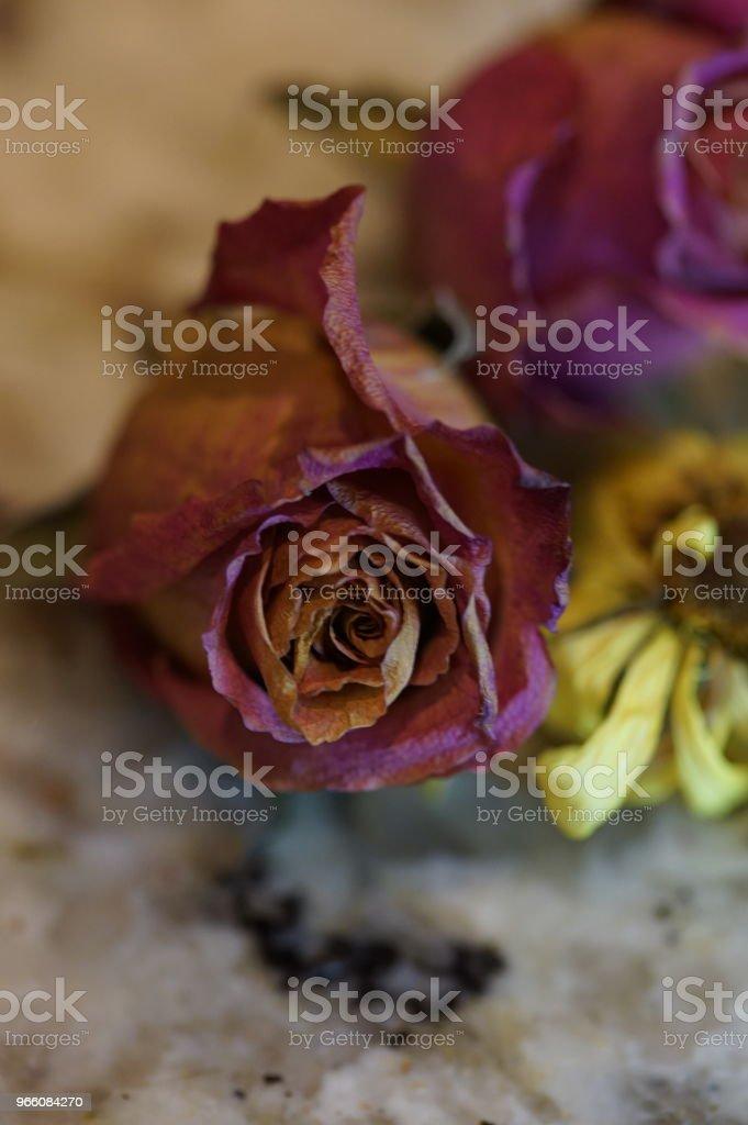 torra rosor - Royaltyfri Blomkorg - Blomdel Bildbanksbilder