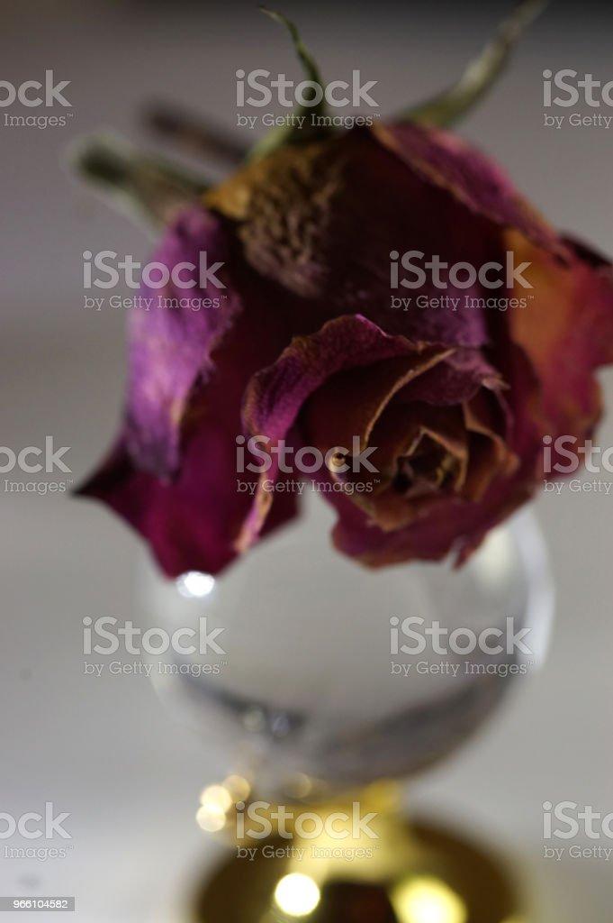 сухие розы - Стоковые фото Без людей роялти-фри