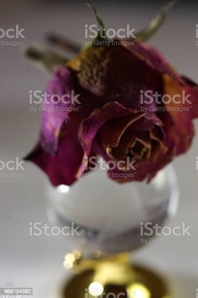 Сухие Розы — стоковые фотографии и другие картинки Без людей