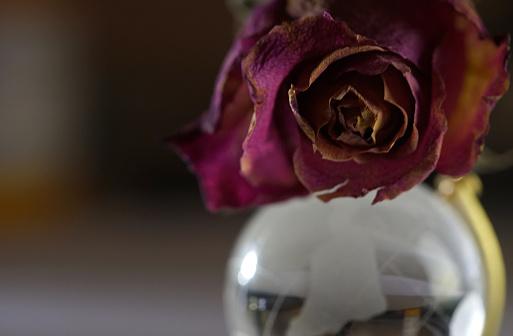 Torra Rosor-foton och fler bilder på Blomkorg - Blomdel