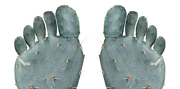 Dry skin Cactus in the shape of a human foot gout stock pictures, royalty-free photos & images