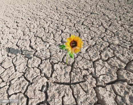 dry soil  of a barren land and single growing plant