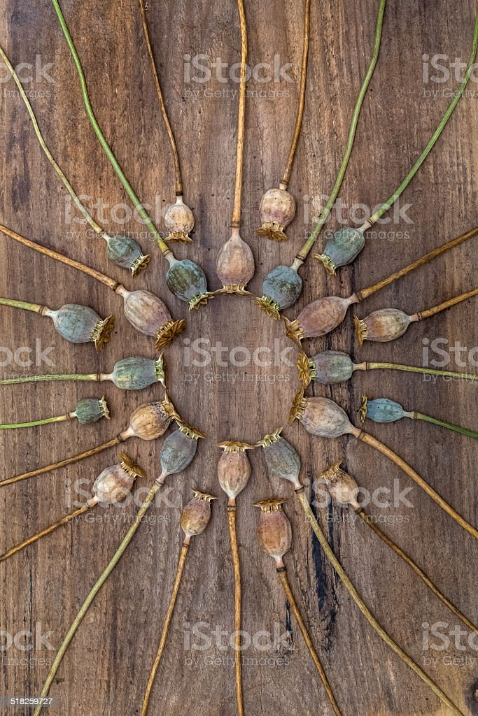 Dry stalks poppy heads lying on a wooden board stock photo