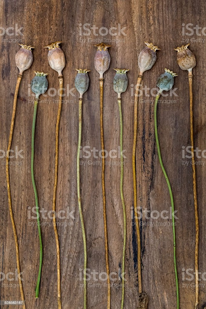 Dry Stalks Poppy Heads on a Wooden Board stock photo