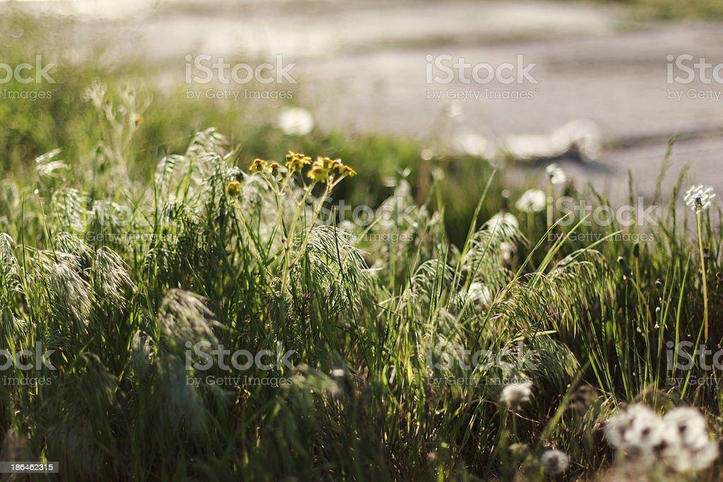 Dry steppe grass background. Prairie Grass. Roadside royalty-free stock photo