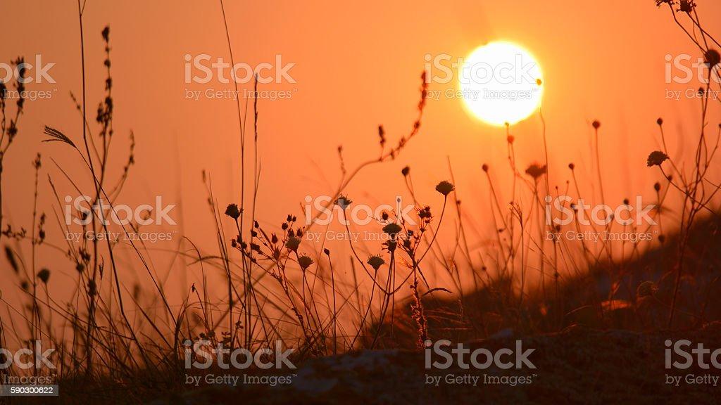 Dry Steppe Grass Meadow In Sunset or Sunrise Light. Autumn Стоковые фото Стоковая фотография