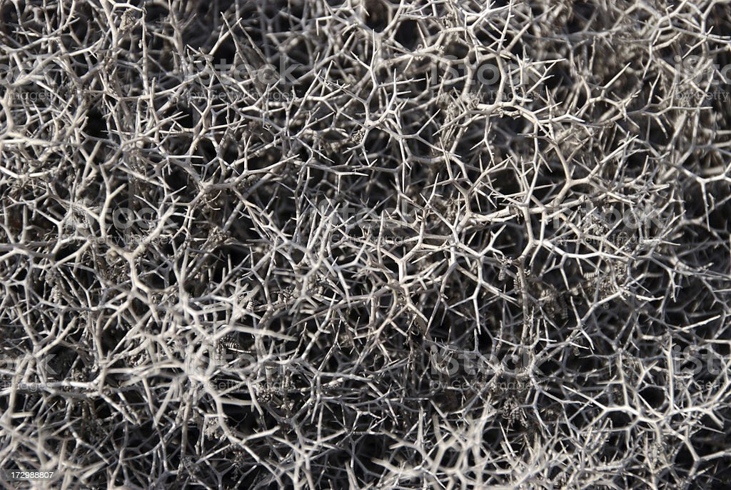 dry thorn bush pattern royalty-free stock photo