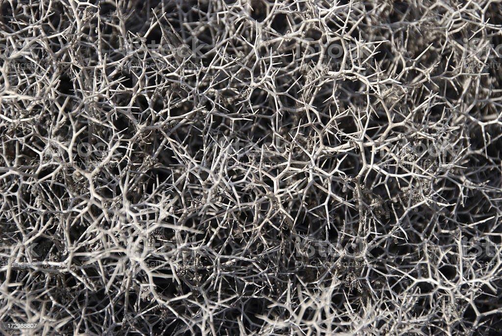 dry thorn bush pattern stock photo