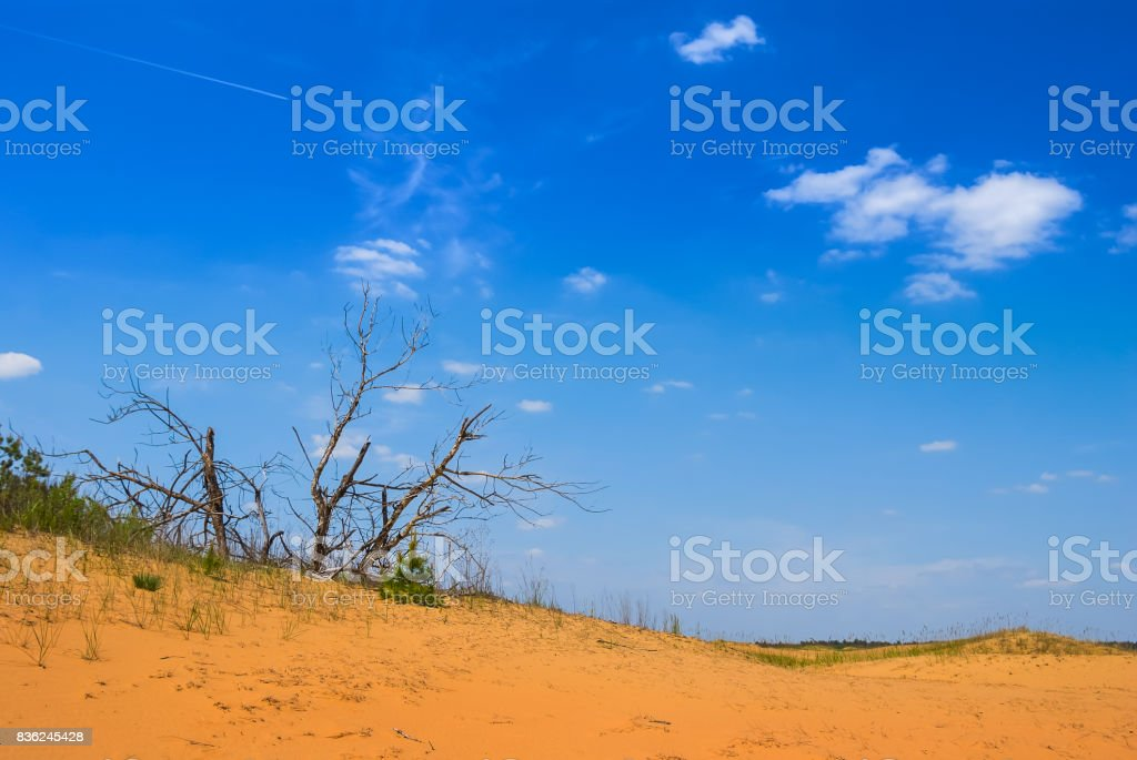 dry tree among a sandy desert stock photo