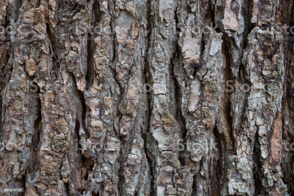 dry tree bark texture background stock photo