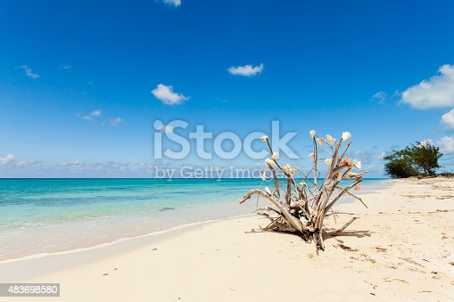 istock Dry tree branch laying on the beach 483698580