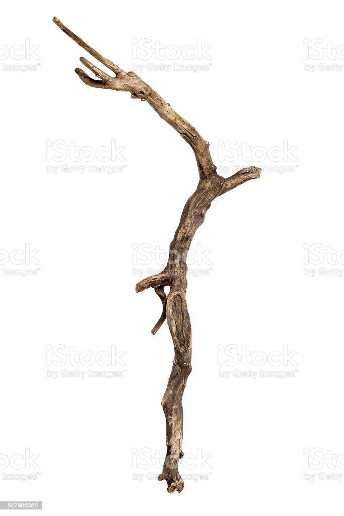 Seco tree branch - foto de stock