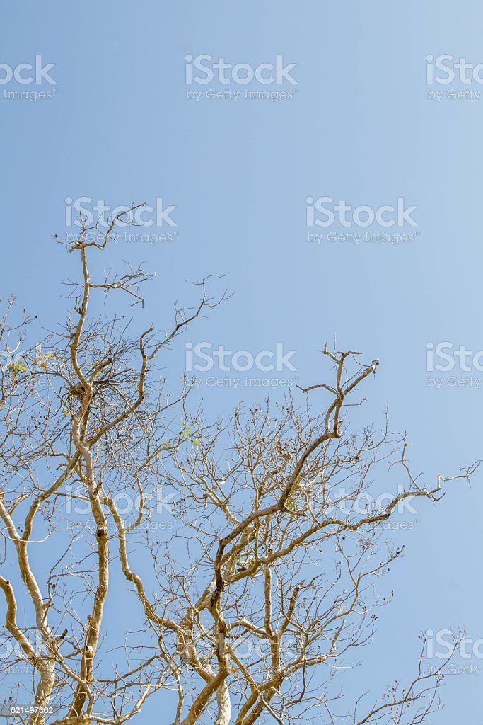 dry tree in summer season Lizenzfreies stock-foto