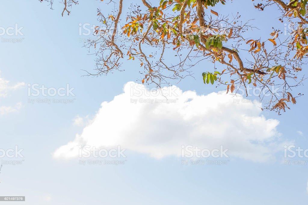 dry tree in summer season photo libre de droits