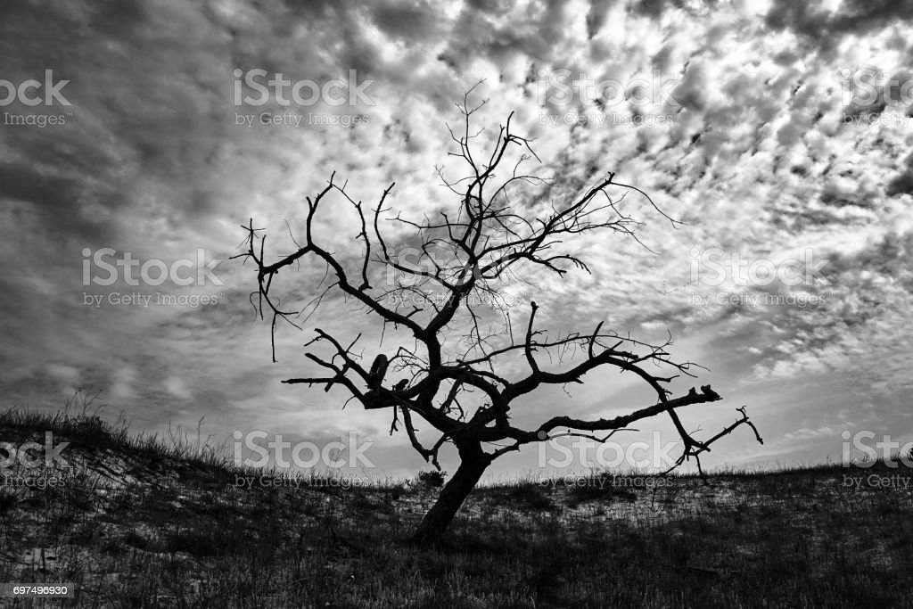 arbre sec dans la nature dramatique - Photo
