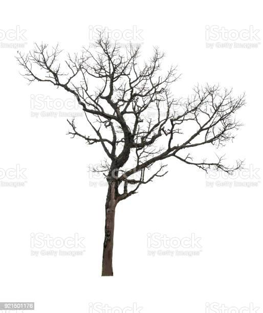 Photo of Dry tree isolated at on white background of file with Clipping Path