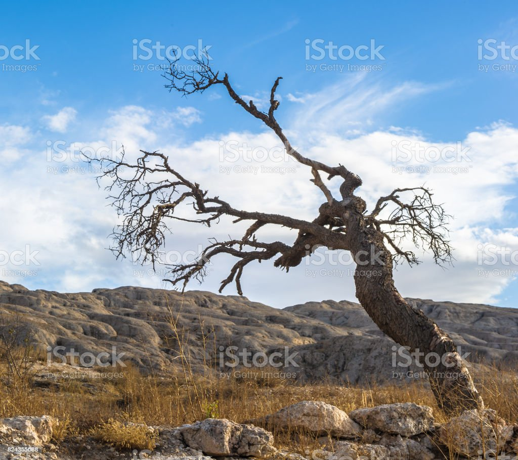 Dry tree over the mountain with stones stock photo