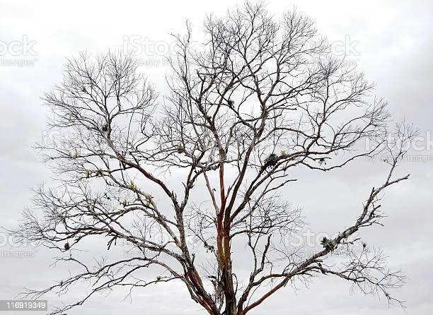 Photo of Dry Tree
