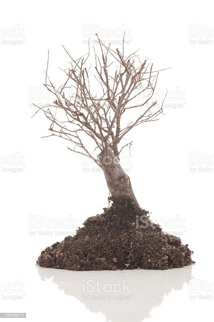 dry tree royalty-free stock photo
