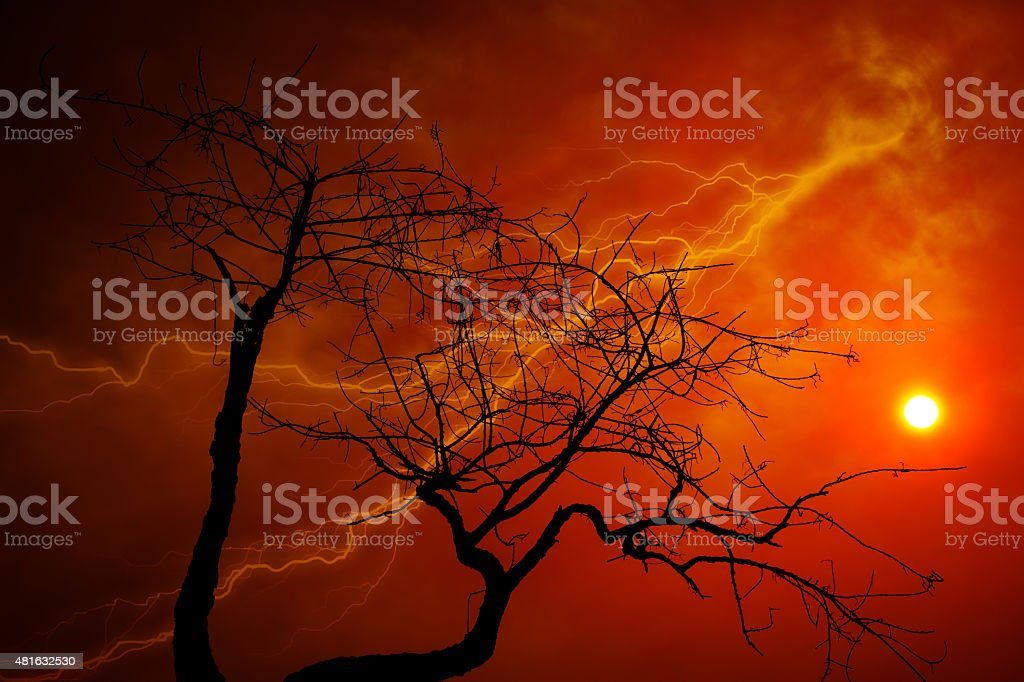 Dry tree with orange sky stock photo