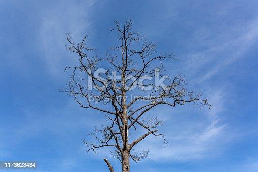 Dead, Death, Drought, Branch - Plant Part, Leaf