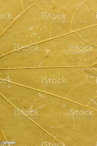 Yellow-green leaf macro for background