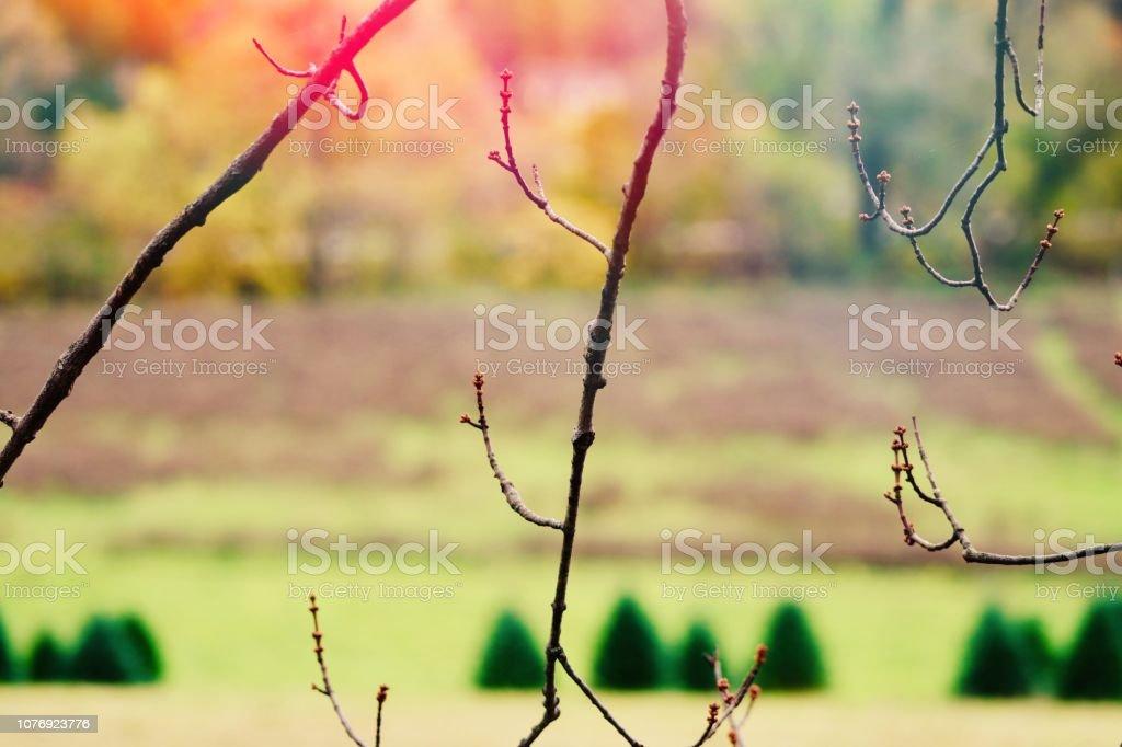 Dry twigs stock photo