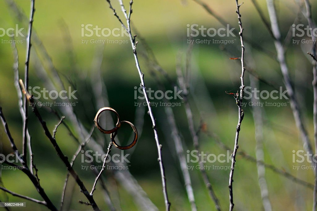 O twigs seco foto royalty-free