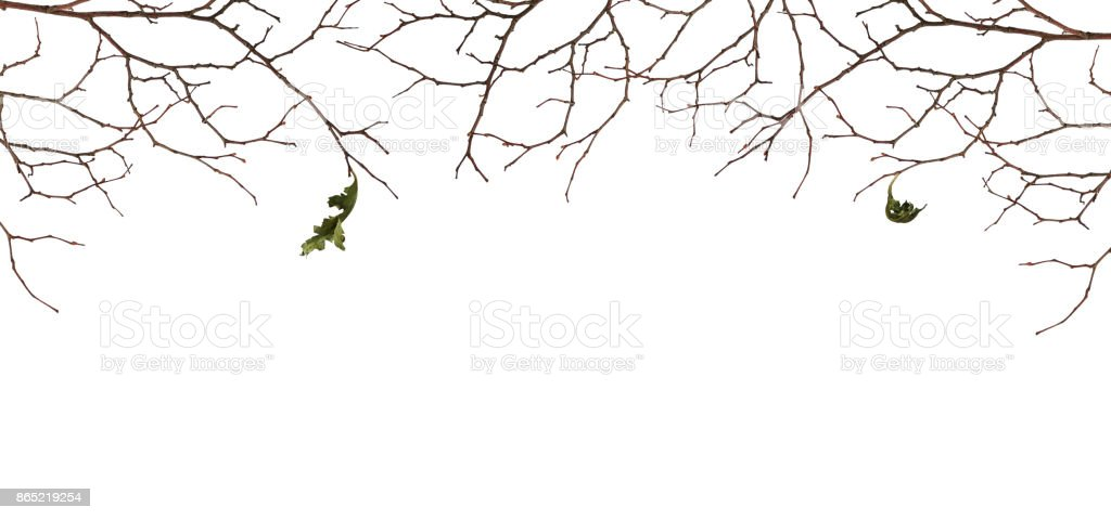 Dry twigs with two old leaves stock photo