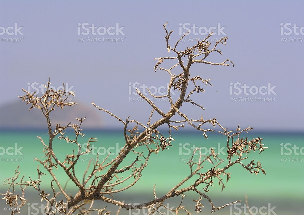 Dry up branch royalty-free stock photo