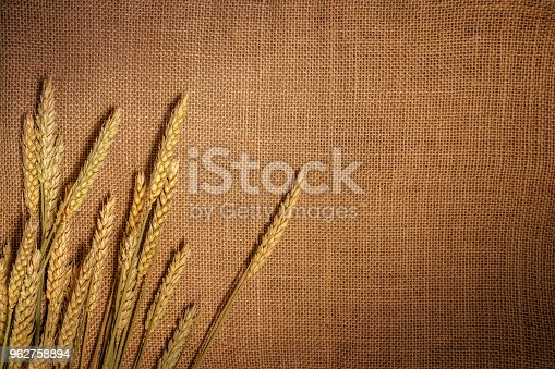 Dry wheat at sackcloth background