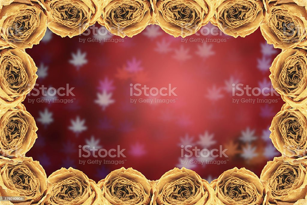 dry white rose frame on blur maple leaves bokeh red royalty-free stock photo
