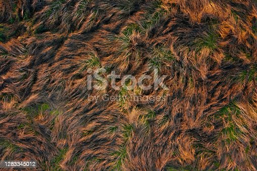 istock Dry wild grass texture aerial view. Natural background of field with dry orange grass from drone view. 1283345012