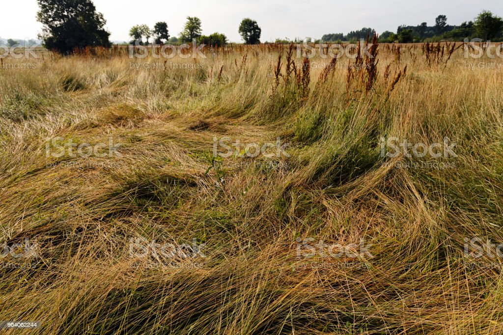 dry wild plants - Royalty-free Autumn Stock Photo