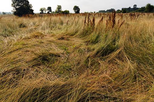 Dry Wild Plants Stock Photo - Download Image Now