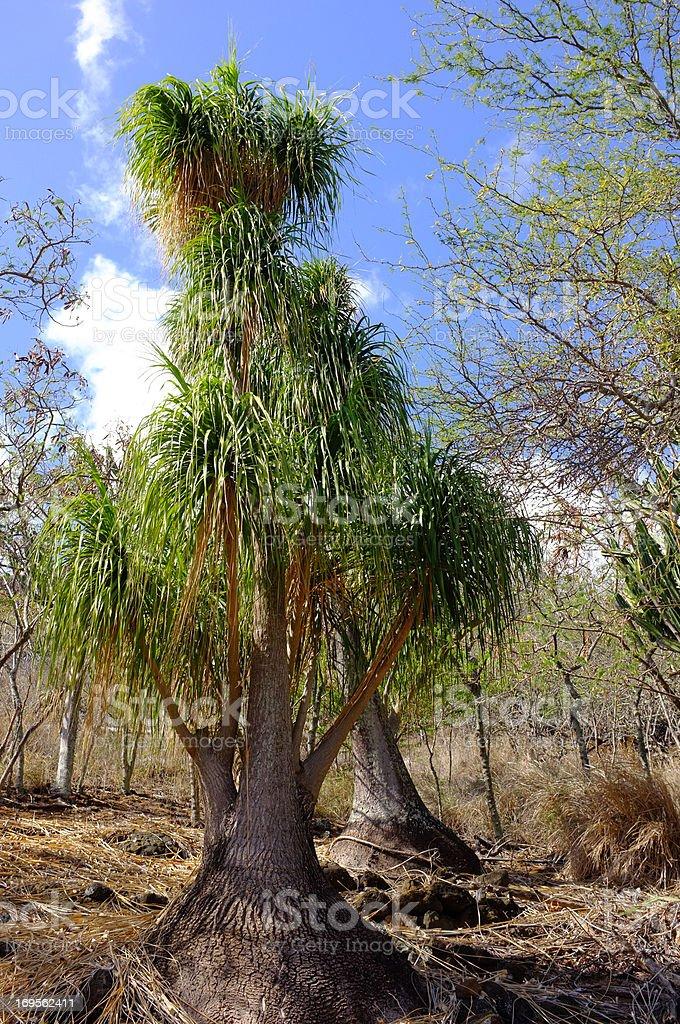 Dry Wildnis-Afrika – Foto